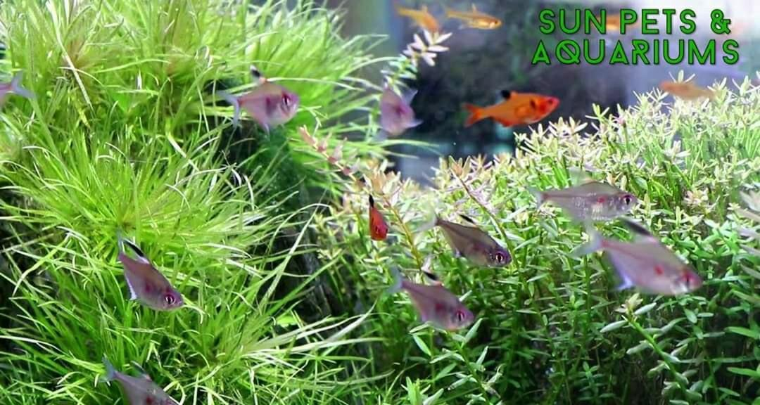 83955assistant_required_in_aquarium_1590032807_2be6f5fa_progressive.jpg